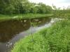 DSCN2036 Бутень на берегу реки