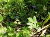 DSCN0780 Будра весной