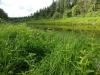 IF Чистец болотный на берегу реки