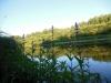 dscn7354 Чистец болотный у реки
