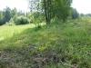 dscn5488 Очиток едкий на поле