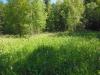 DSCN2268 Горец змеиный на лесной поляне