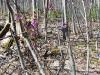 DSCN0283 Волчье лыко в лиственном лесу